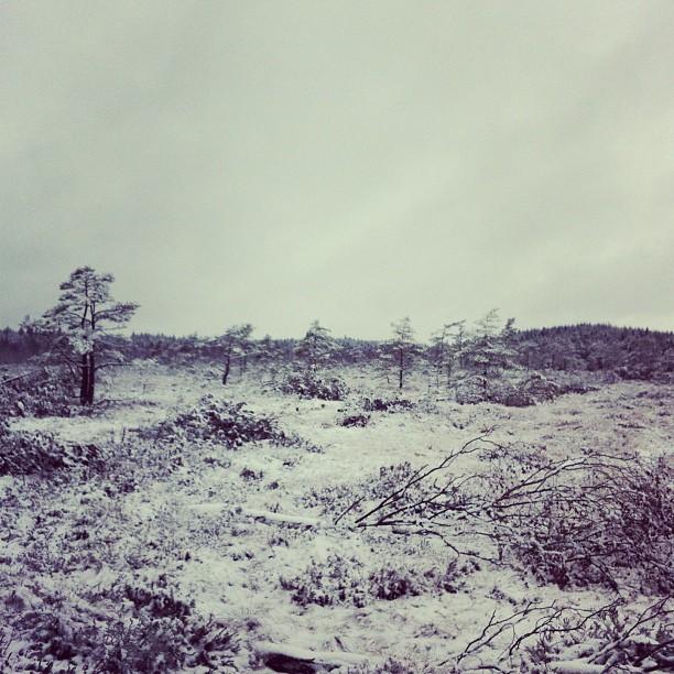 Februari (på en mosse på en ås i Skåne).