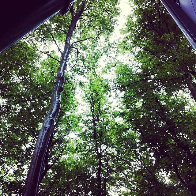 Första dagen på första sommarmånaden - kura under ett tak medan åskan brakar loss ovanför trädtopparna.