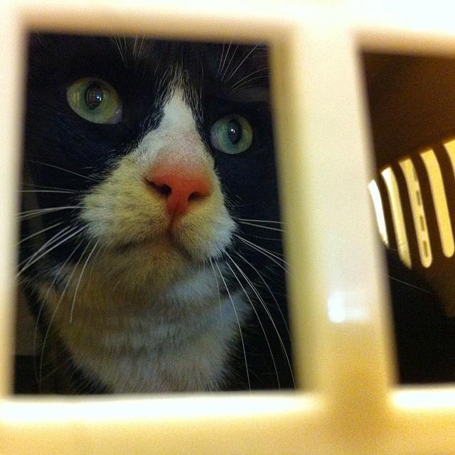 """Instängd i en bur på djursjukhuset kan ingen höra dig skrika. """"Hjälp! Människorna har fängslat mig utan rättegång! Jag vill ha min kattvokat innan jag erkänner att det är jag som kissar utanför lådan i bland. Eller var det inte därför ni låste in mig? Nähä? Oops, too much said."""""""