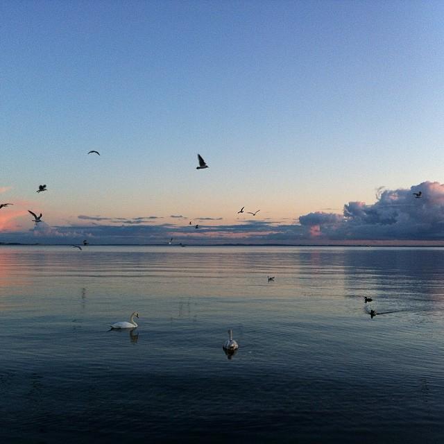 Att bo vid havet har sina poänger. Kvällspromenader är definitivt en av dem.