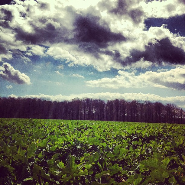 Gröna fält under moln