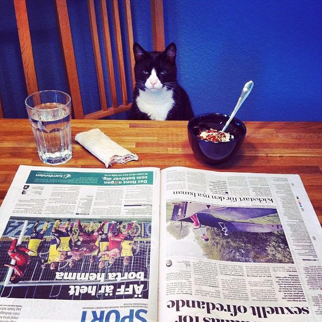 """""""Jag hämtade tidningen och dukade upp själv. Du får ta kattmaten i dag, jag är så kattostrofalt less på kycklingsmaken!"""" sa han och ruckade inte en millimeter på det."""