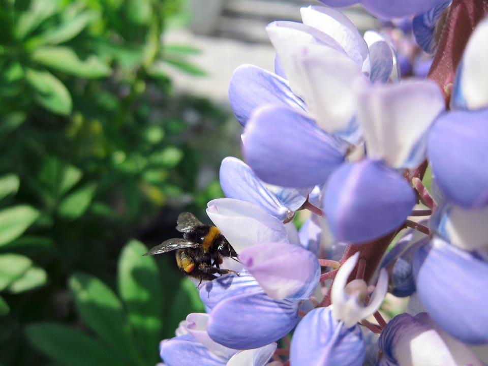 PP Blommor 1