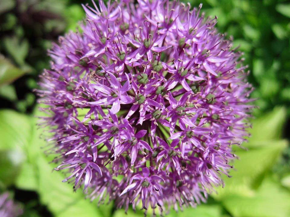 PP Blommor 4