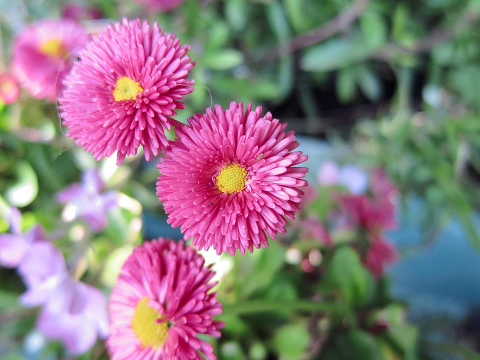 PP Blommor 6