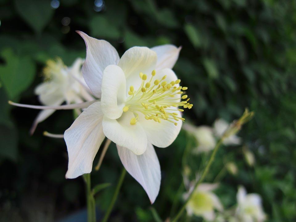 PP Blommor 7