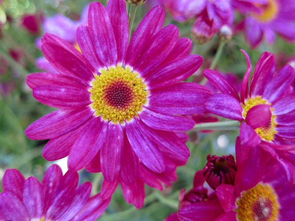PP Blommor 8