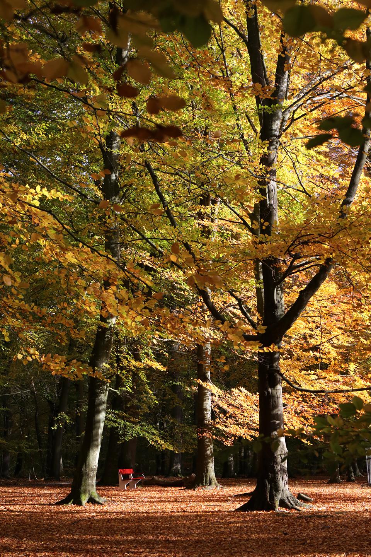 pp-host-i-palsjo-skog-3