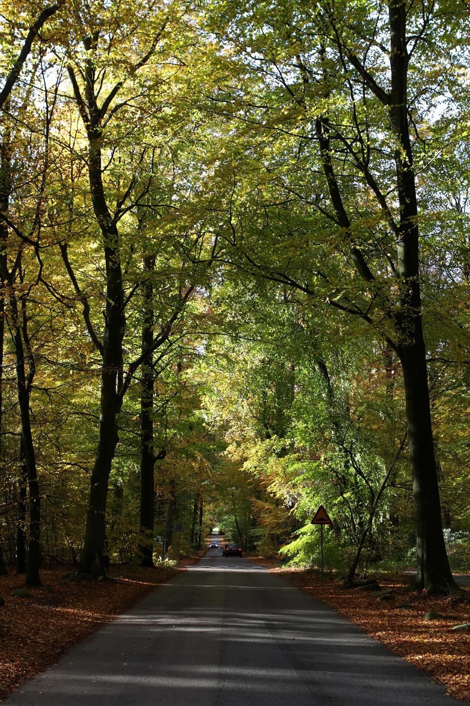 pp-host-i-palsjo-skog-4